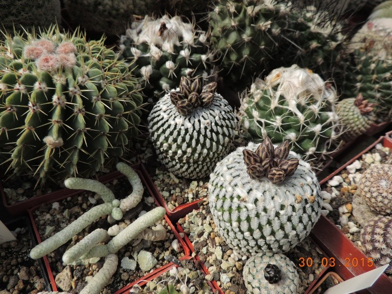 Cacti and Sukkulent in Köln, every day new flowers in the greenhouse Part 136 Bild_819