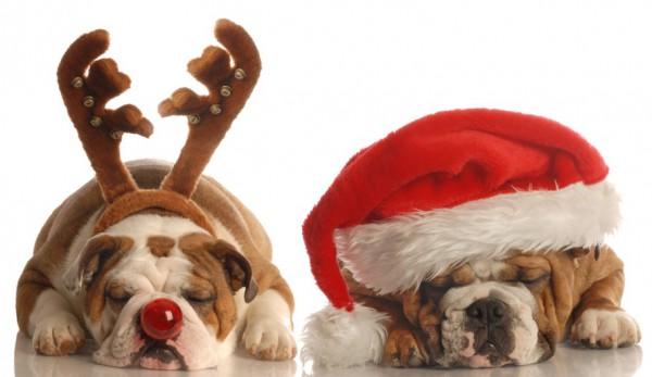 concours avatar de noël 2015, règlement et inscription..  - Page 10 Dogs-c10