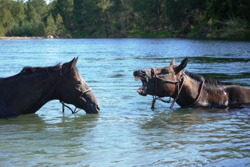Des grimaces de cheval : venez voter  Heiva_10