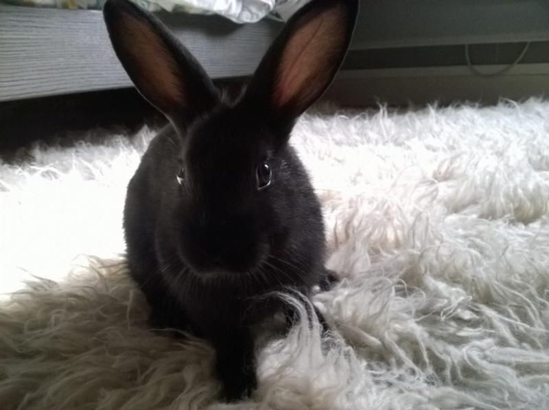 PETIT MARCEL bébé lapin mâle Fot69510