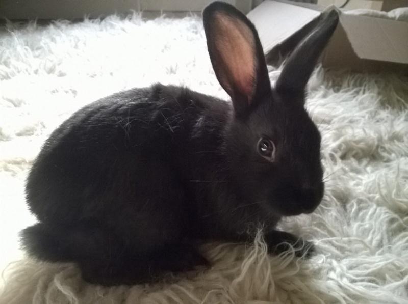 PETIT MARCEL bébé lapin mâle Fotf4610