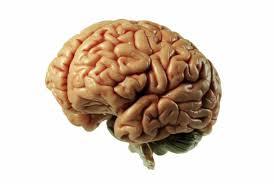 « Notre cerveau nous rend vivant » par Catherine Vidal, neurobiologiste Cervea10