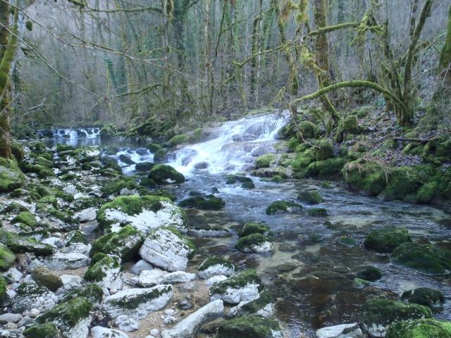 albarine - Frayère de l'Albarine  Pc190010