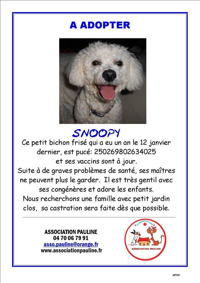 SNOOPY,petit bichon.. Snoopy10