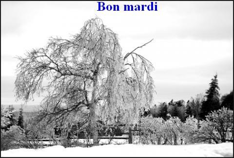 Bonjour / bonsoir de décembre 3ee39410