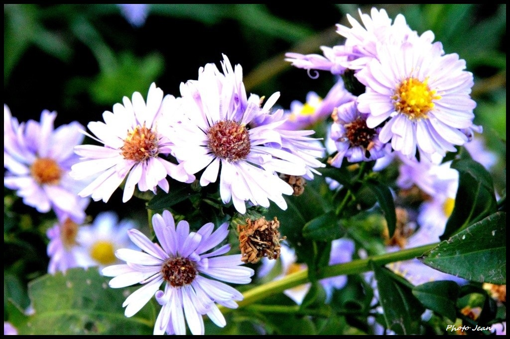 Beautifull flowers Dsc_0649