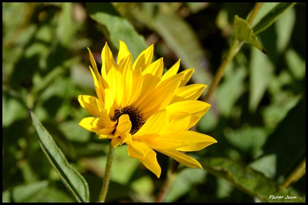 Beautifull flowers Dsc_0650