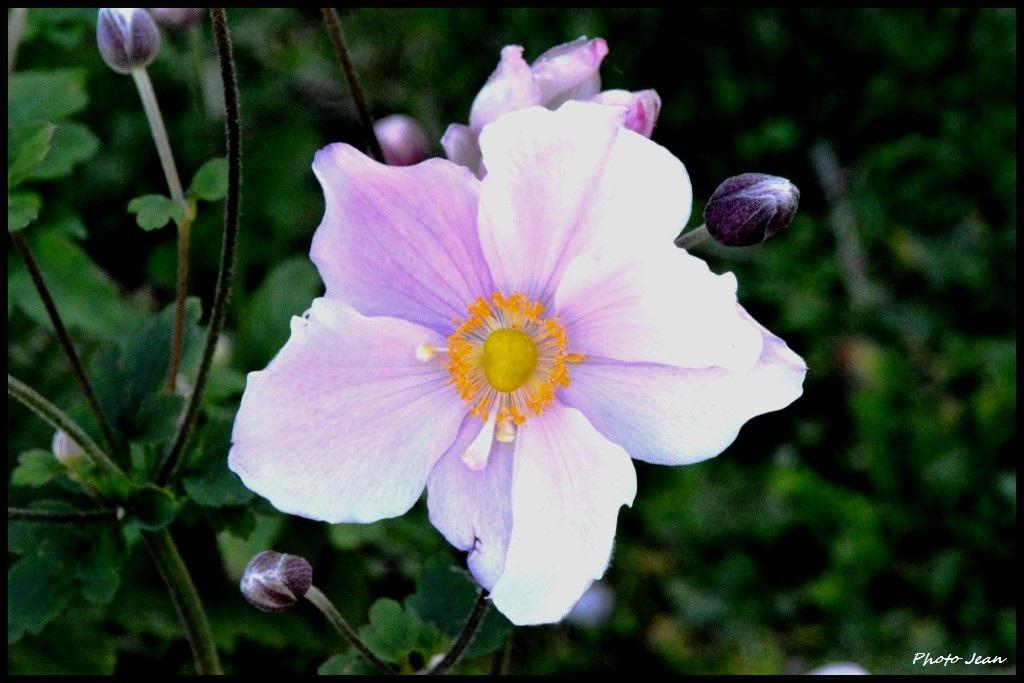 Beautifull flowers Dsc_0651