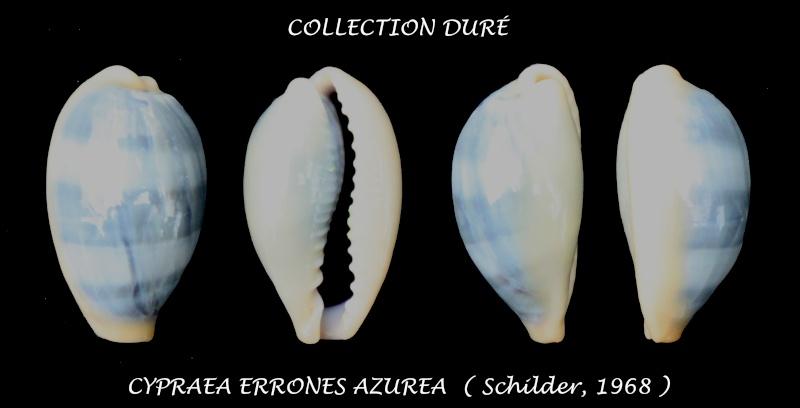 Erronea errones azurea - Schilder, 1968 Panora36