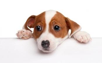 Qué mascota elegir en función de la edad del niño Perro10