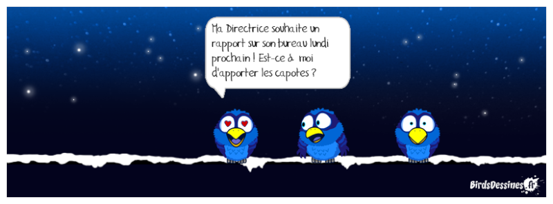 Quelques Birds ? Mister11