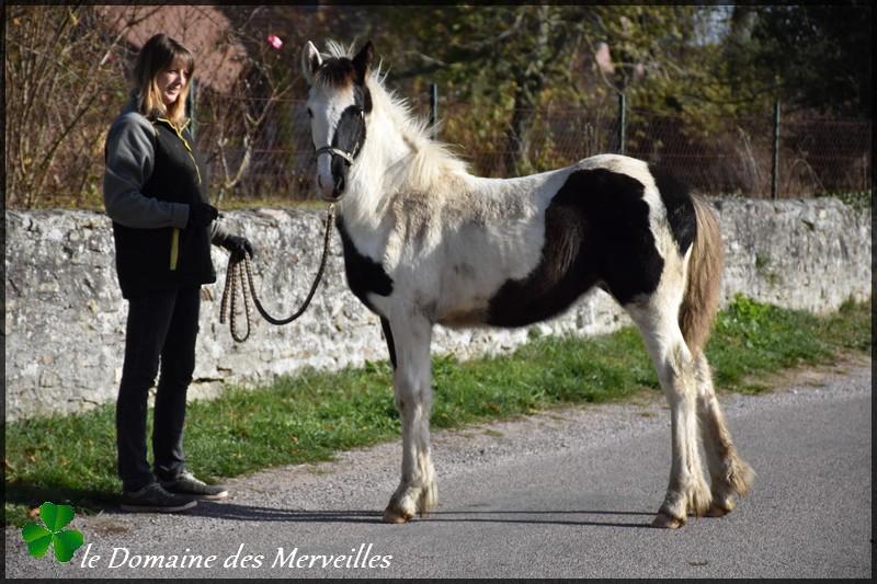 Domaine des Merveilles 14_nov13
