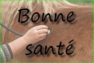 Visites et Soins aux chevaux de Riley Livingstone 01_bmp23