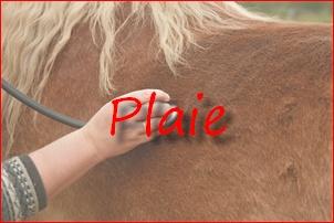 Visite des chevaux participant au CCE 03_bmp13