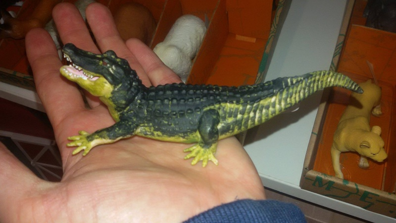 Terra Battat Alligator - additional pictures needed Battal10