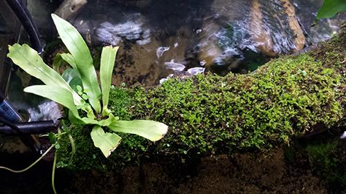 Mur végétal avec aquarium de 320L ---> Paludarium - Page 15 20151111