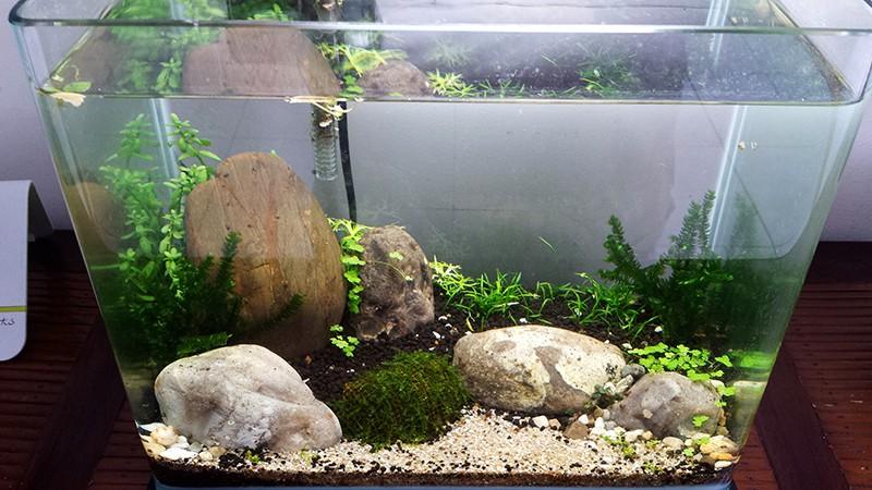 Mur végétal avec aquarium de 320L ---> Paludarium - Page 15 20151210