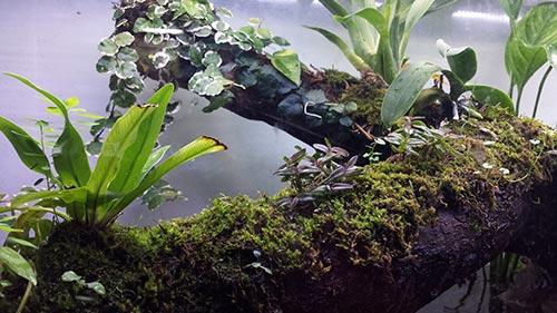 Mur végétal avec aquarium de 320L ---> Paludarium - Page 15 311