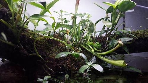 Mur végétal avec aquarium de 320L ---> Paludarium - Page 15 411