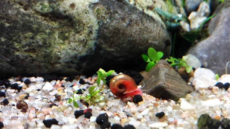 Mur végétal avec aquarium de 320L ---> Paludarium - Page 15 710