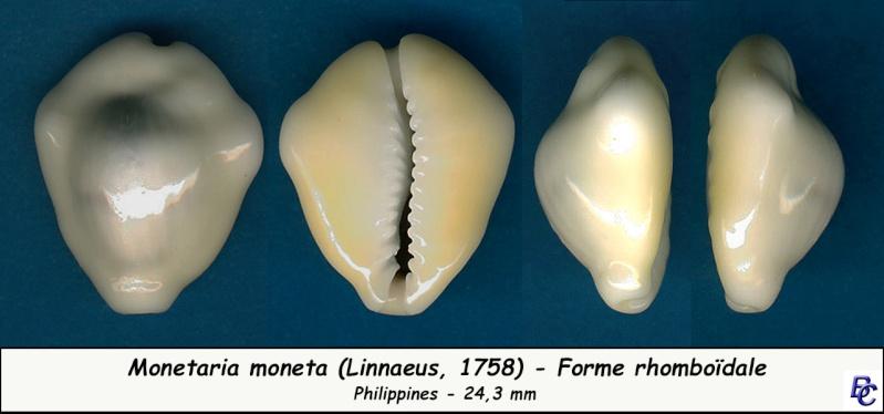 Monetaria moneta - (Linnaeus, 1758) - Page 4 Moneta13