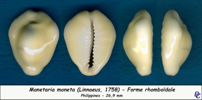Monetaria moneta - (Linnaeus, 1758) - Page 4 Moneta14