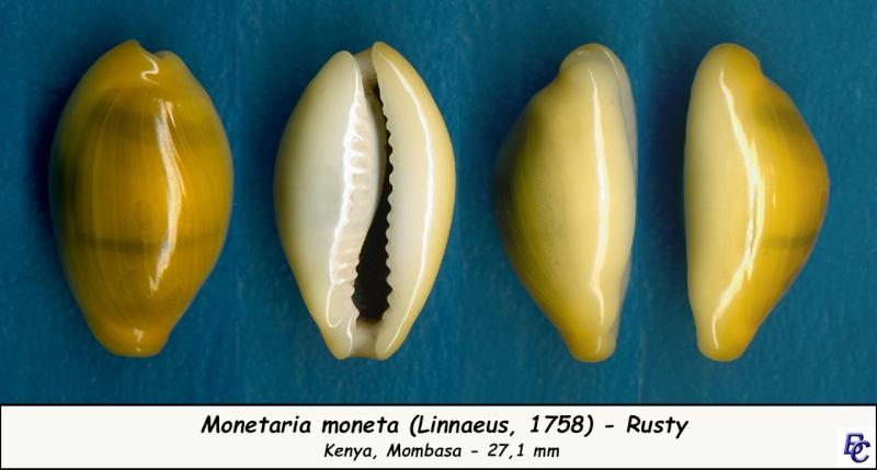 Monetaria moneta - (Linnaeus, 1758) - Page 4 Moneta17