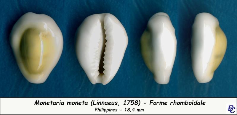 Monetaria moneta - (Linnaeus, 1758) - Page 4 Moneta18
