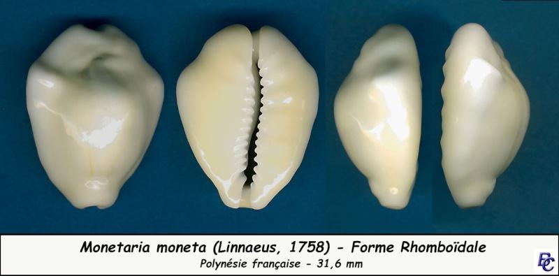 Monetaria moneta - (Linnaeus, 1758) - Page 4 Moneta19