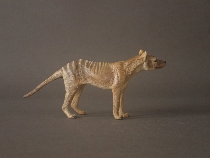 The wonderful male thylacine from Anna Pc250510
