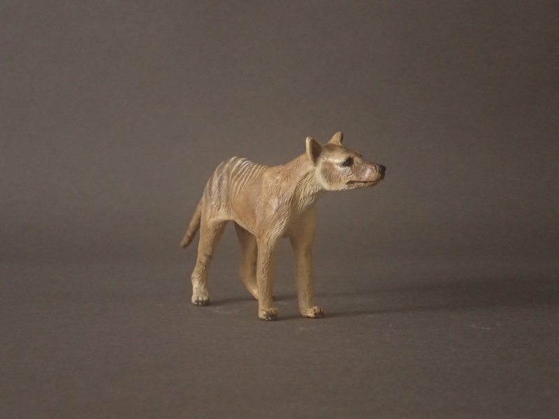 The wonderful male thylacine from Anna Pc250511
