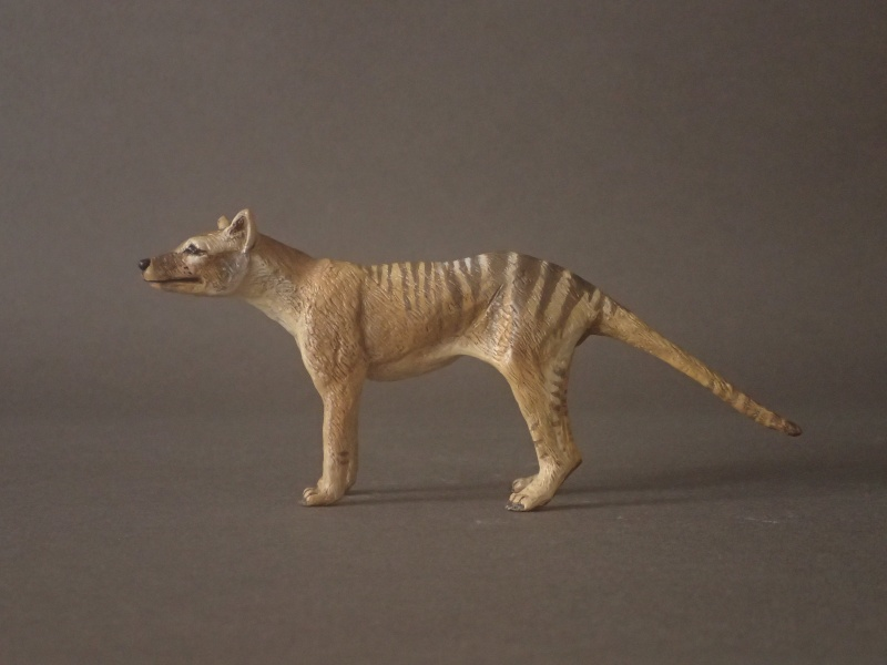The wonderful male thylacine from Anna Pc250610