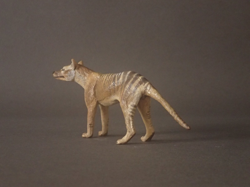 The wonderful male thylacine from Anna Pc250611