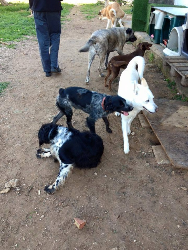 Canis Yoda 12507410