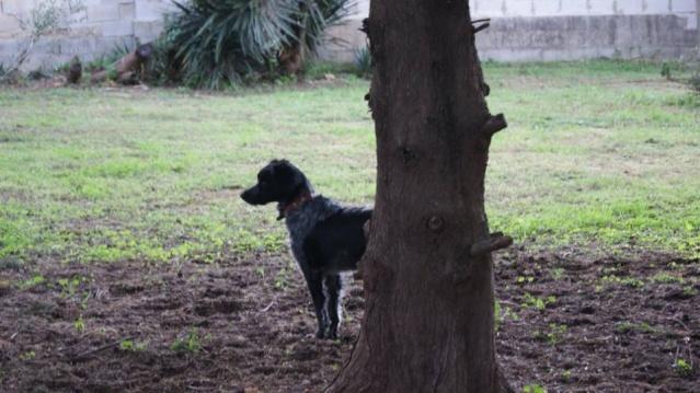 Canis Yoda 12541110