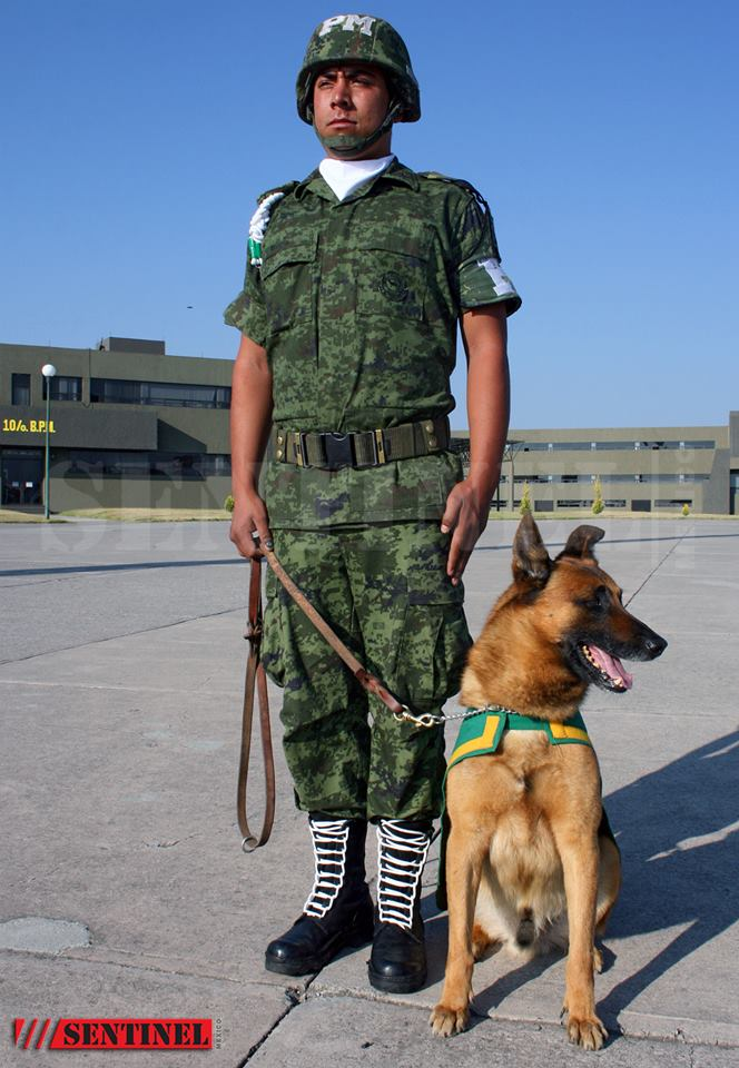 Animaux soldats - Page 5 13237