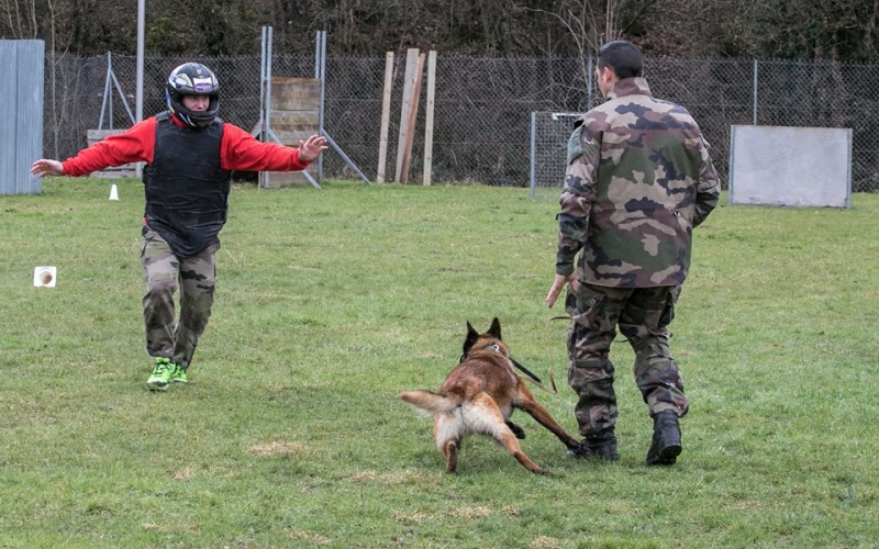 Animaux soldats - Page 6 14269