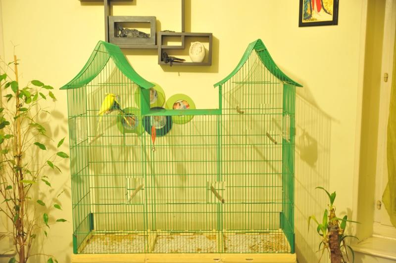 Cage maison et vegetaux 81263210