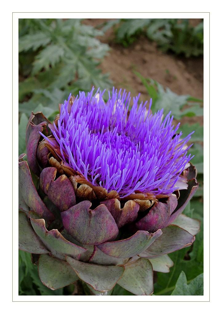 Fleurs,....fruit,.....tout ce qui se mange,...se boit....ou qui vient de la nature.......... - Page 5 Igp59910