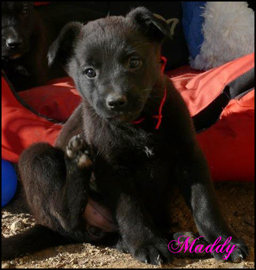 MADDY et MACKENSY chiots à l'adoption 12607210