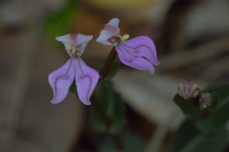 Quelques petites fleurs comme çà Dsc_6710
