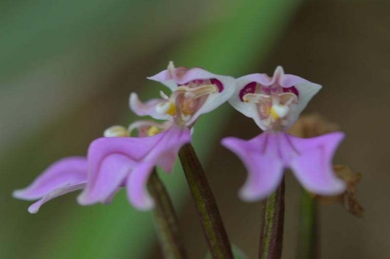 Quelques petites fleurs comme çà Dsc_6810