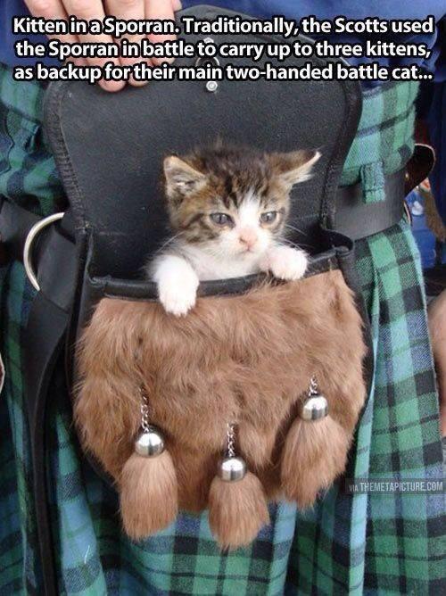 Wildcats 15176010