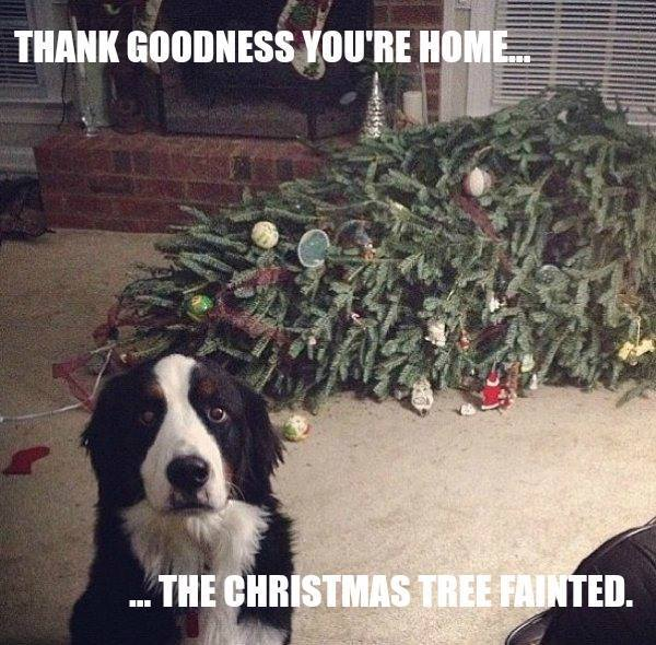Christmas mirth  213