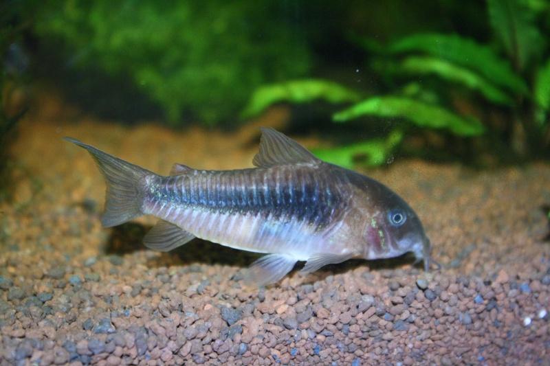 Aquarium 60 L de Estrella87 - Page 3 Img_5311