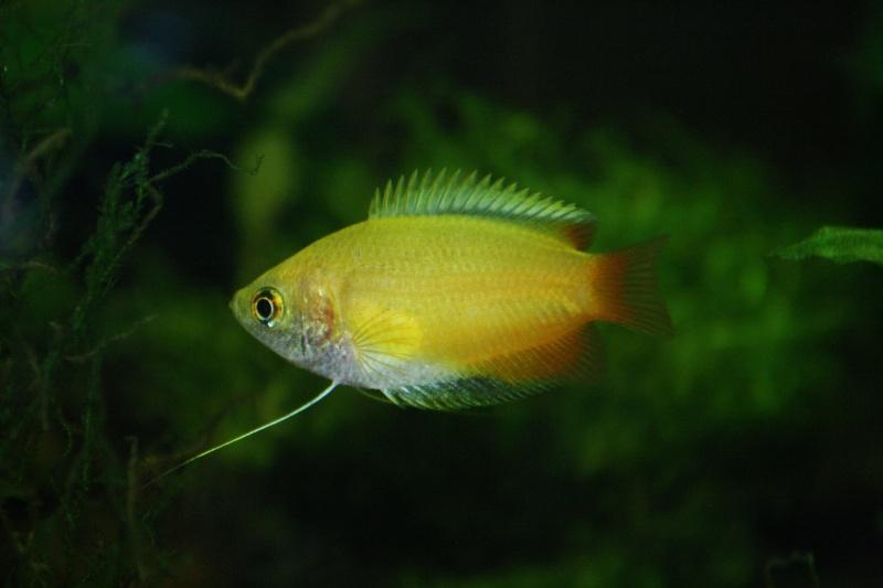 Aquarium 60 L de Estrella87 - Page 3 Img_5313