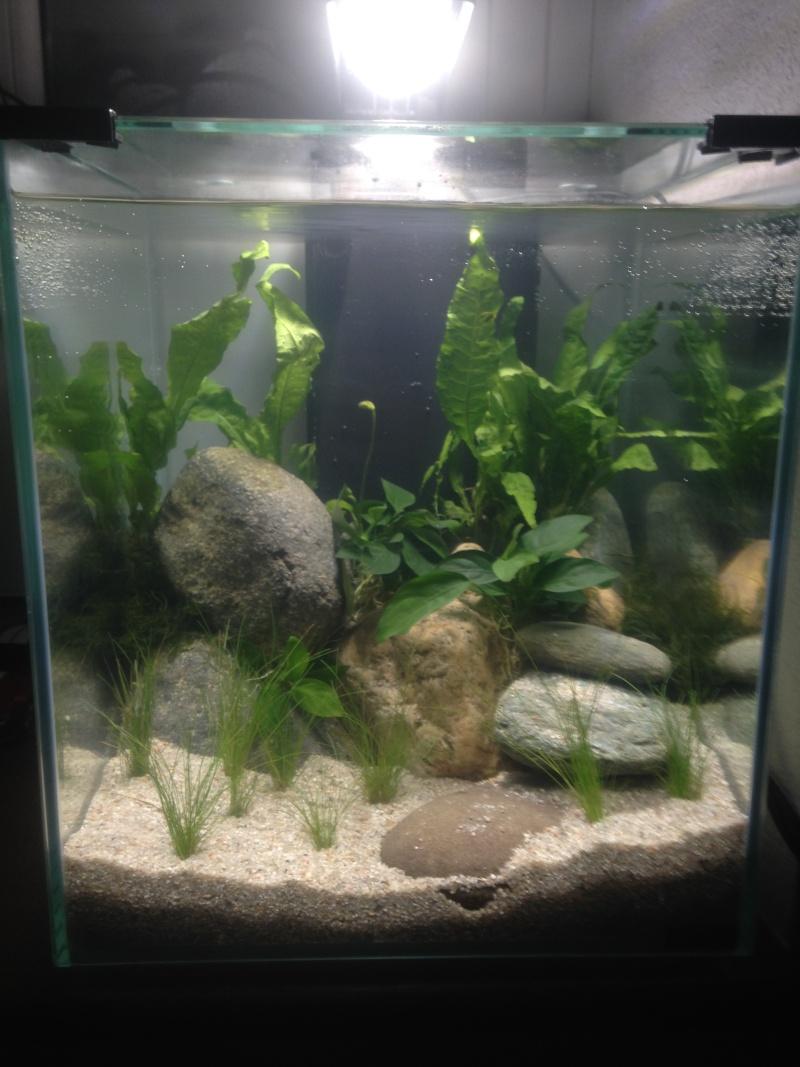 Cube 40 litres Aqua11
