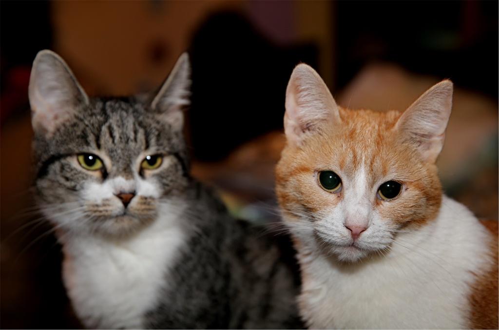 Parrainage des chats de Mme Angela Chats_13