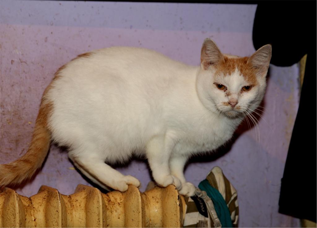 Parrainage des chats de Mme Angela Chats_17
