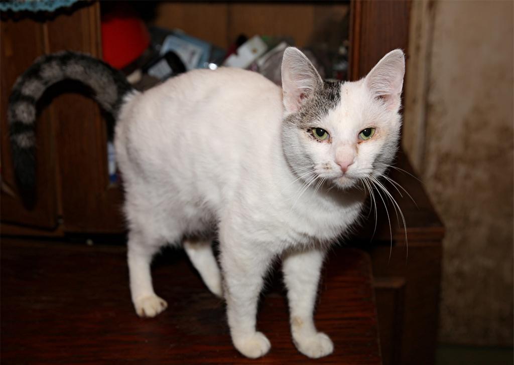 Parrainage des chats de Mme Angela Chats_18